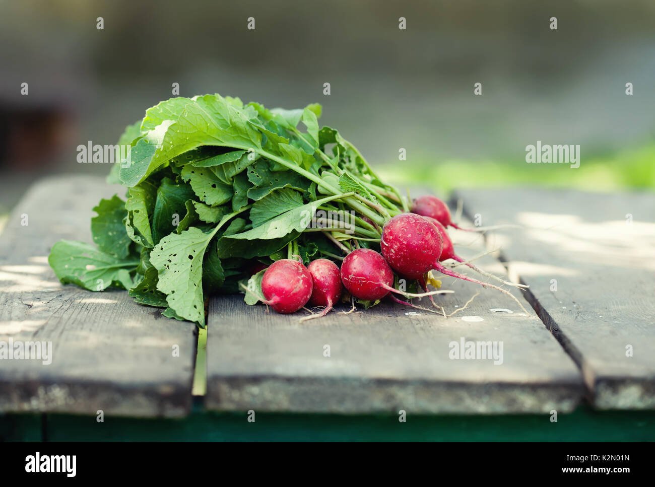 Ripe radish on wooden table background. Farmers food still life. Shallow depth field, selective focus - Stock Image
