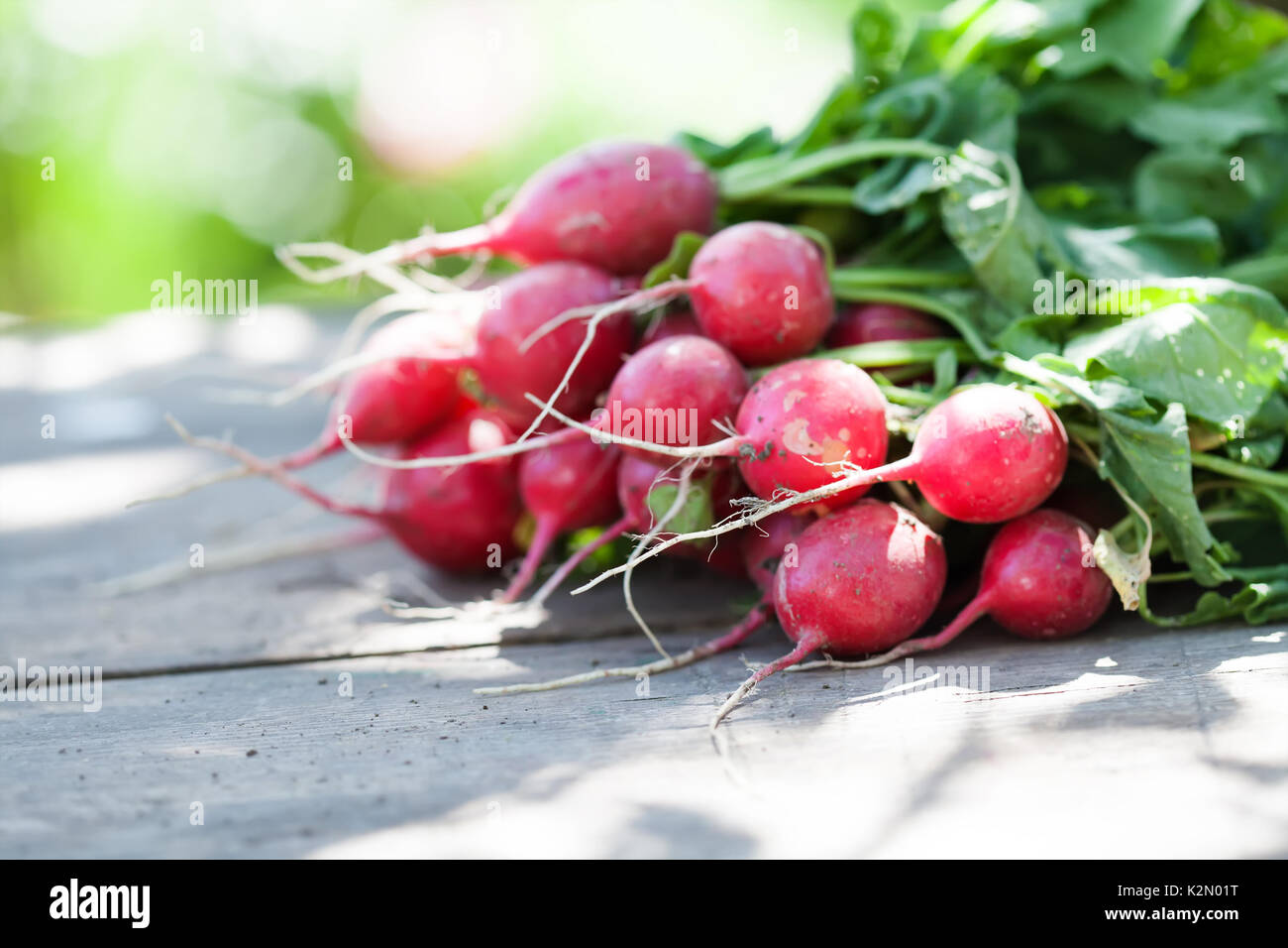 Ripe radishes on vintage wooden table background. Sunny day farmers harvest still life. Shallow depth field, selective - Stock Image