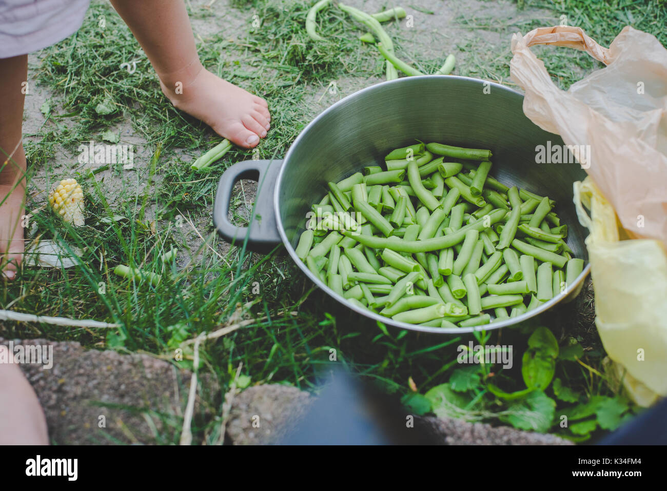 Fresh snapped green beans in a silver pot. - Stock Image