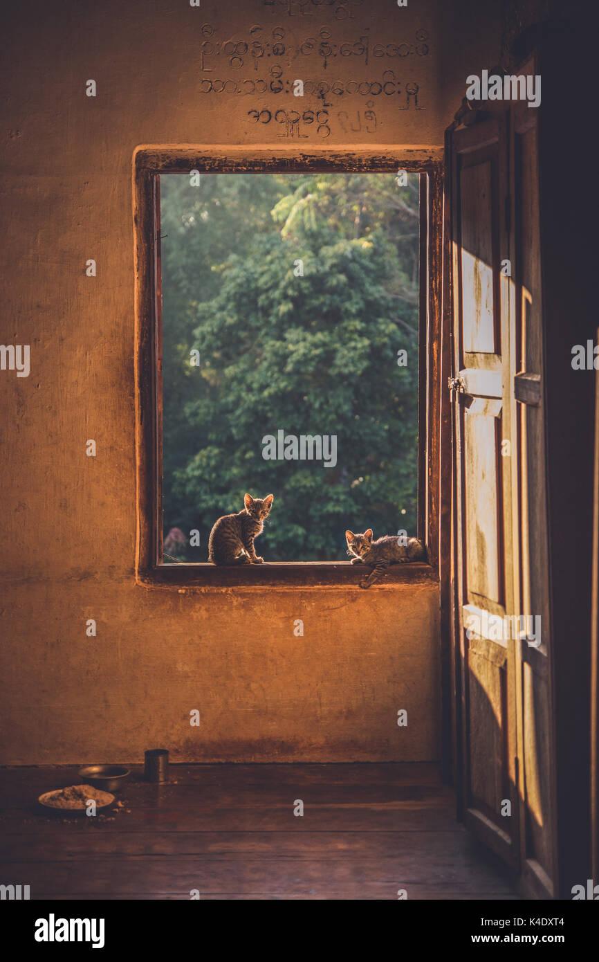 Small kittens sitting in the window of a Buddhist Montessori along my trek through Shan State, Myanmar, Burma. - Stock Image