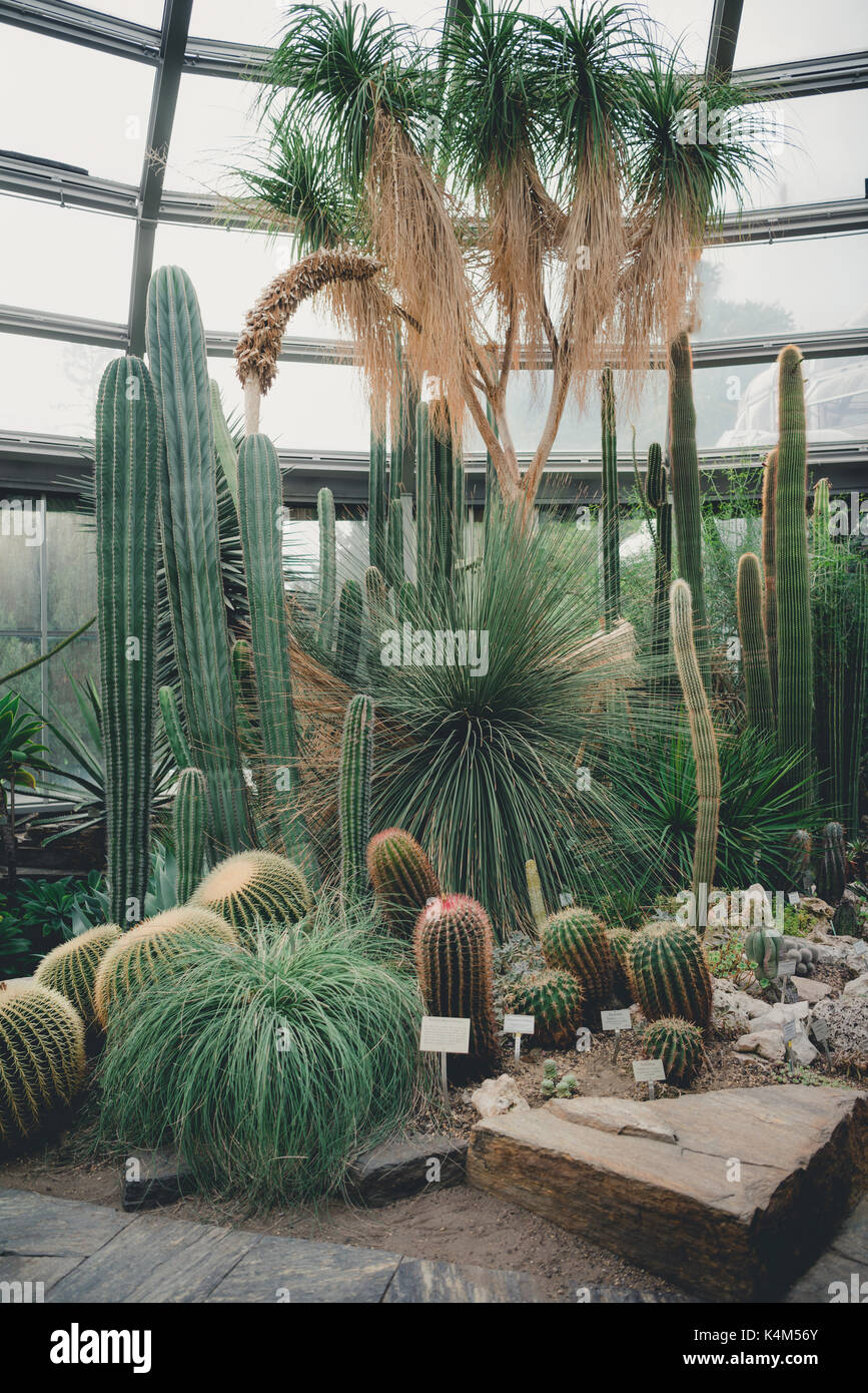 Exotic cacti. Various shapes and sizes. - Stock Image