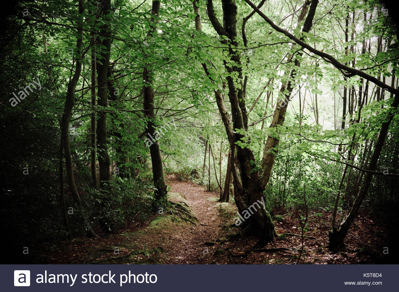 Wooded scene on Toys Hill in Kent, UK.Stock Photo