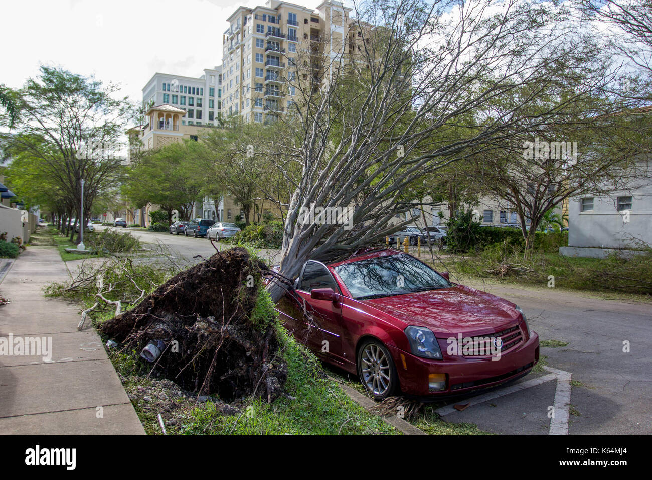 Miami, Florida, USA. 11th Sep, 2017. A car is crushed under an uprooted tree following Hurricane Irma in Miami, Stock Photo