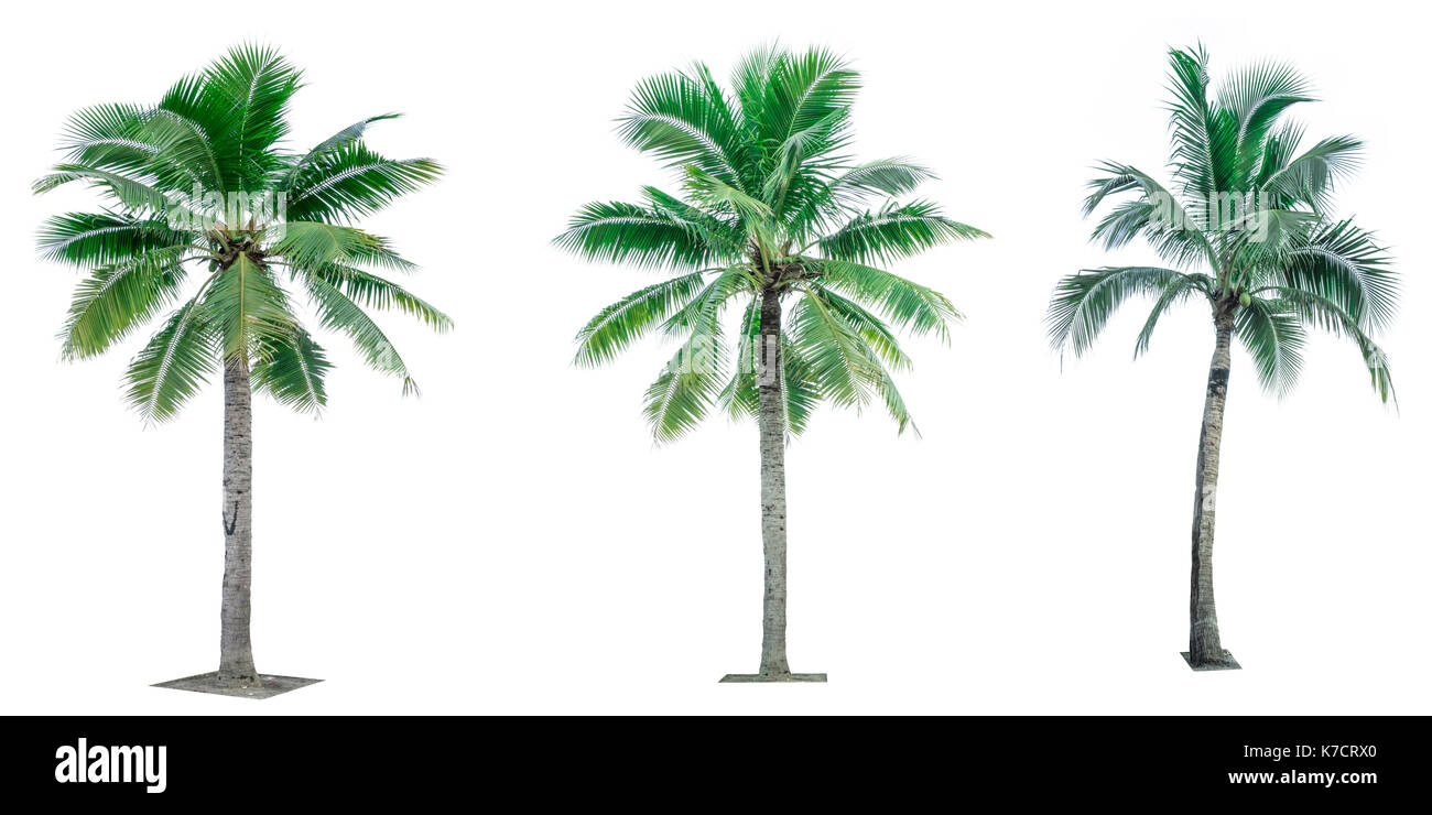 Coconut Tree Cut Out Stock Images & Pictures - Alamy
