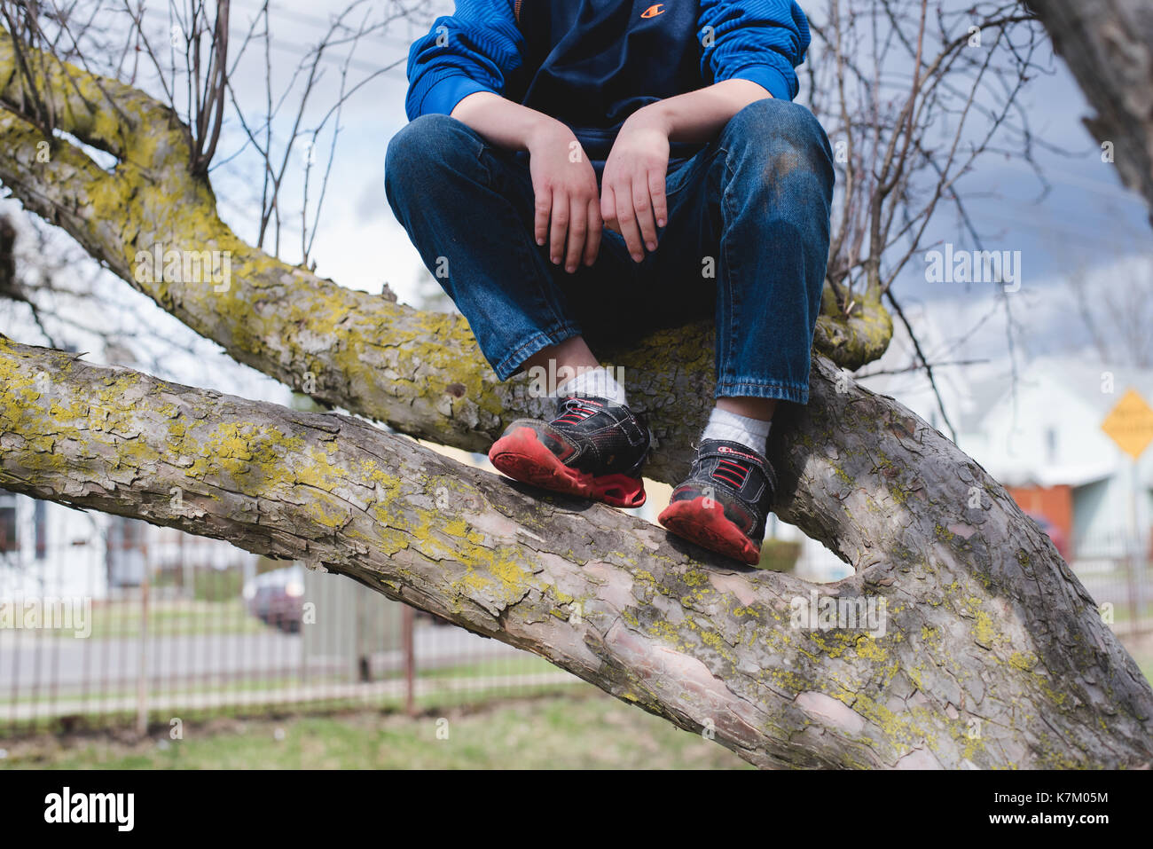 Boy sitting in a tree. - Stock Image