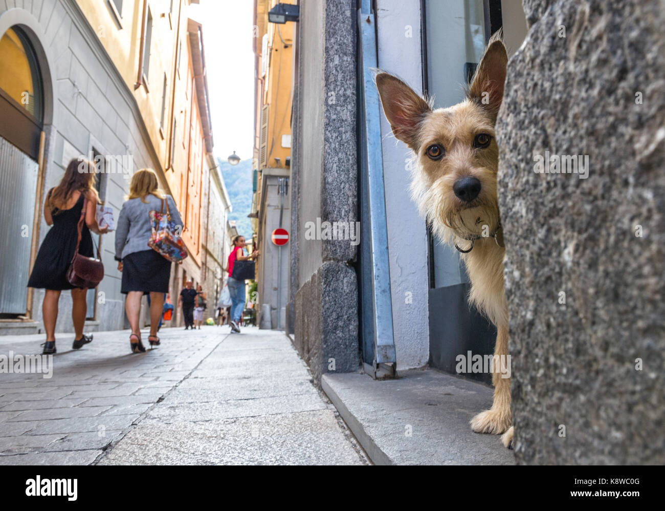small-dog-in-a-shop-doorway-looking-out-