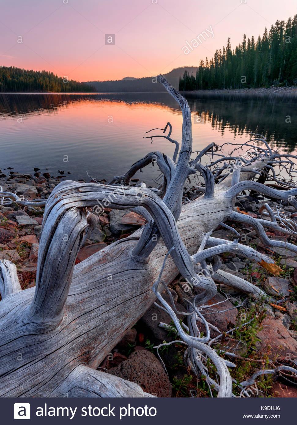 Snag and Juniper Lake at Dawn, Lassen Volcanic National Park, California - Stock Image