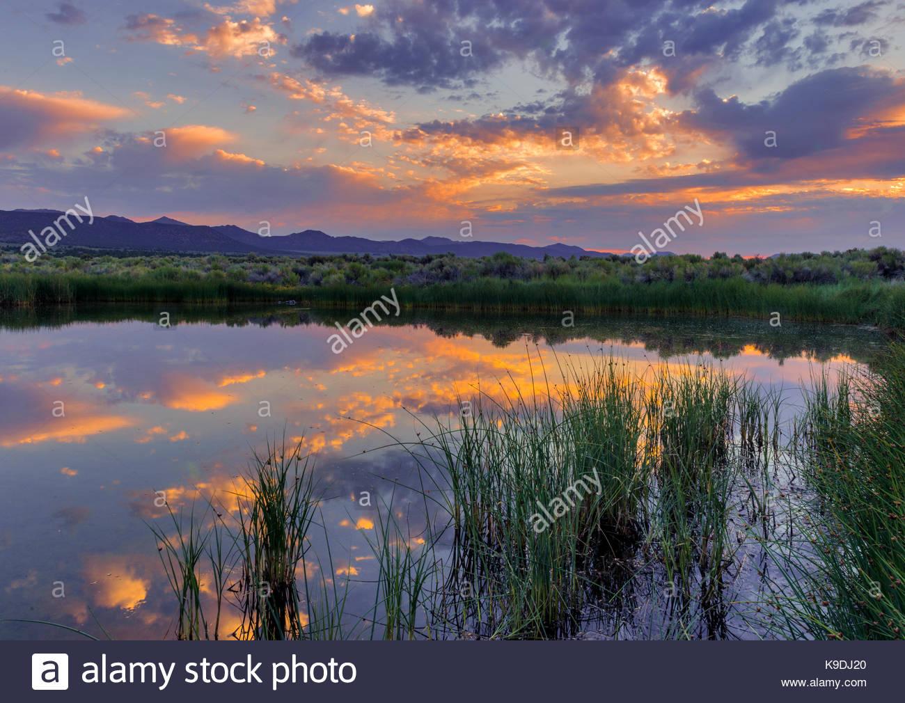 Dechambeau Ponds at Dawn, Mono Basin National Forest Scenic Area, California - Stock Image