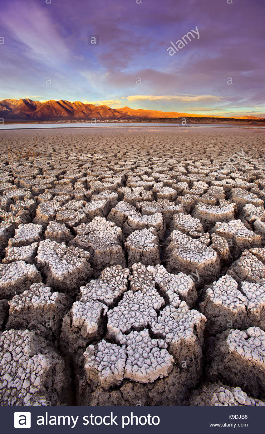 Cracked Alkali at Sunset, BLM Lands, Mono County, Caifornia - Stock Image