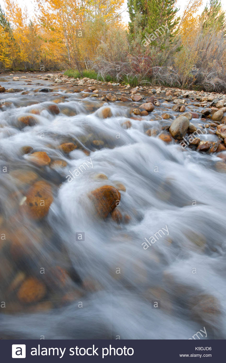 Lee Vining Creek in Fall, Mono Basin National Forest Scenic Area, California - Stock Image