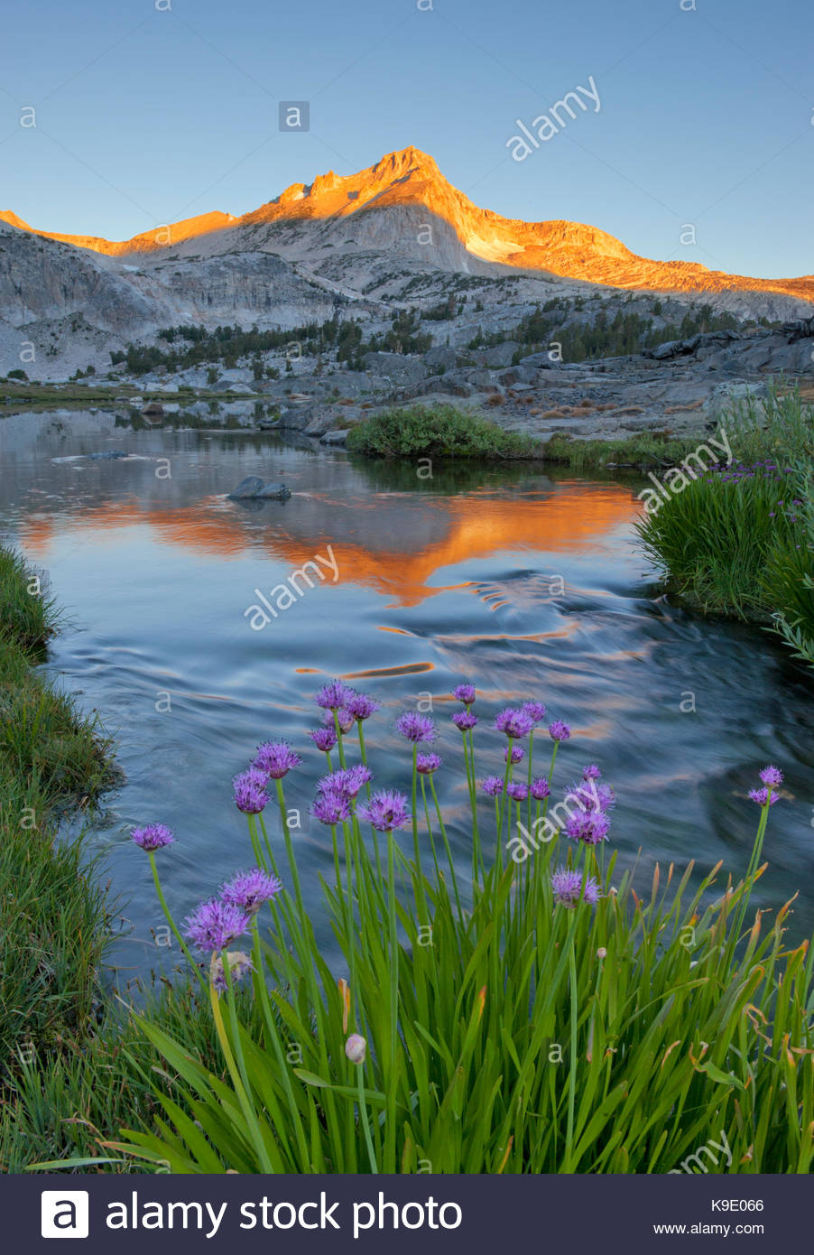 Wild Onion, Greenstone Lake and North Peak, Hoover Wilderness, Inyo National Forest, California - Stock Image
