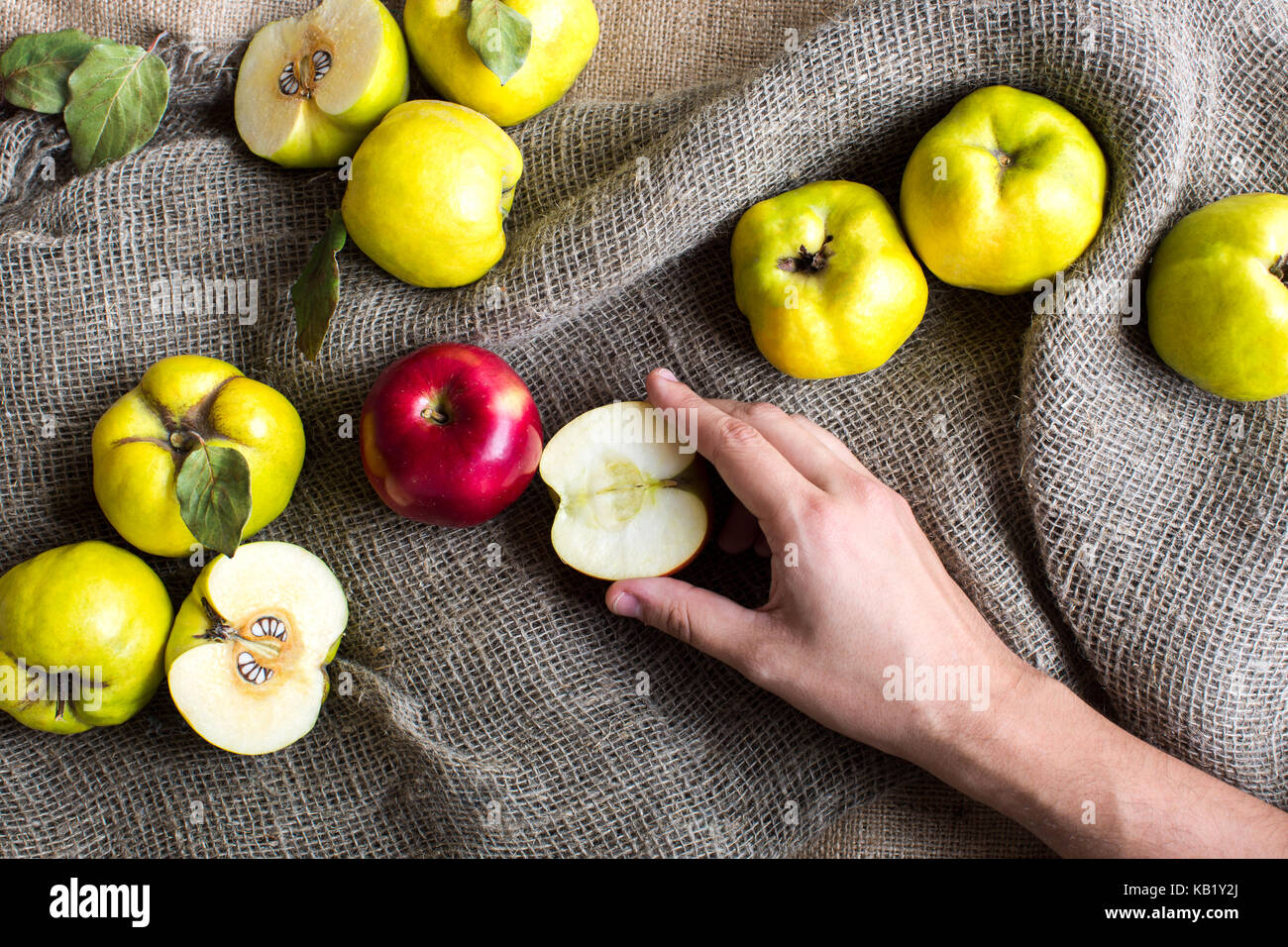 autumn, harvest, food concept. on the grey textured fabrick of sack there are lots of fruits, green and yellow quinces, - Stock Image