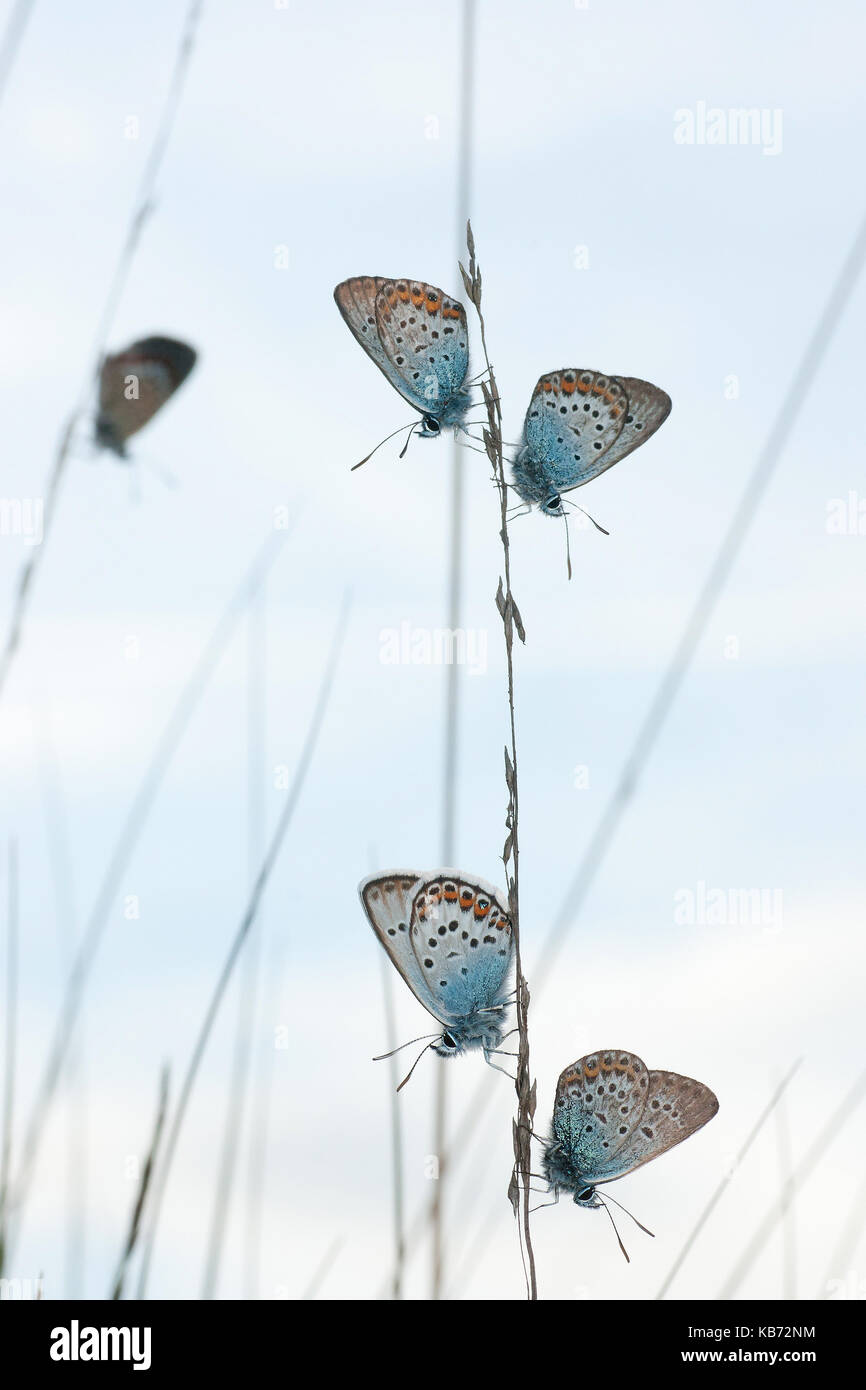 Silver-studded 