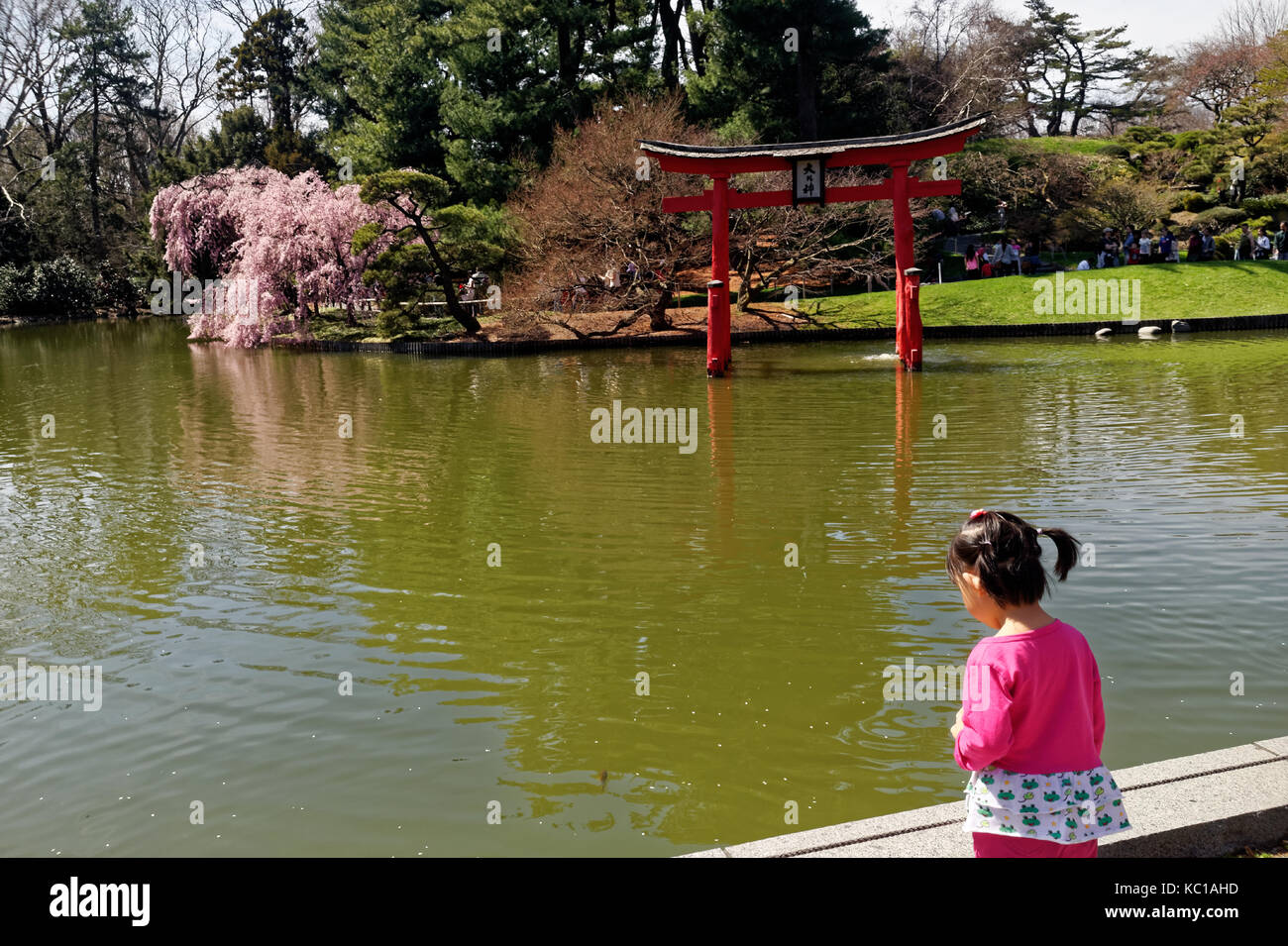 Little girl gazing at a pond at the Japanese Garden, Brooklyn Botanic Gardens. - Stock Image