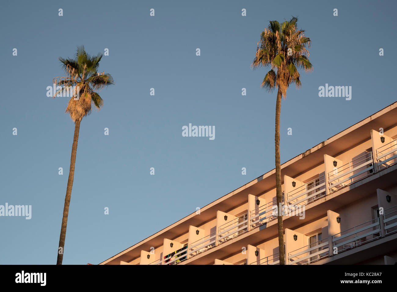 Palm tress against a clear blue sky outside the Guitart Rosa hotel, Lloret de Mar Stock Photo