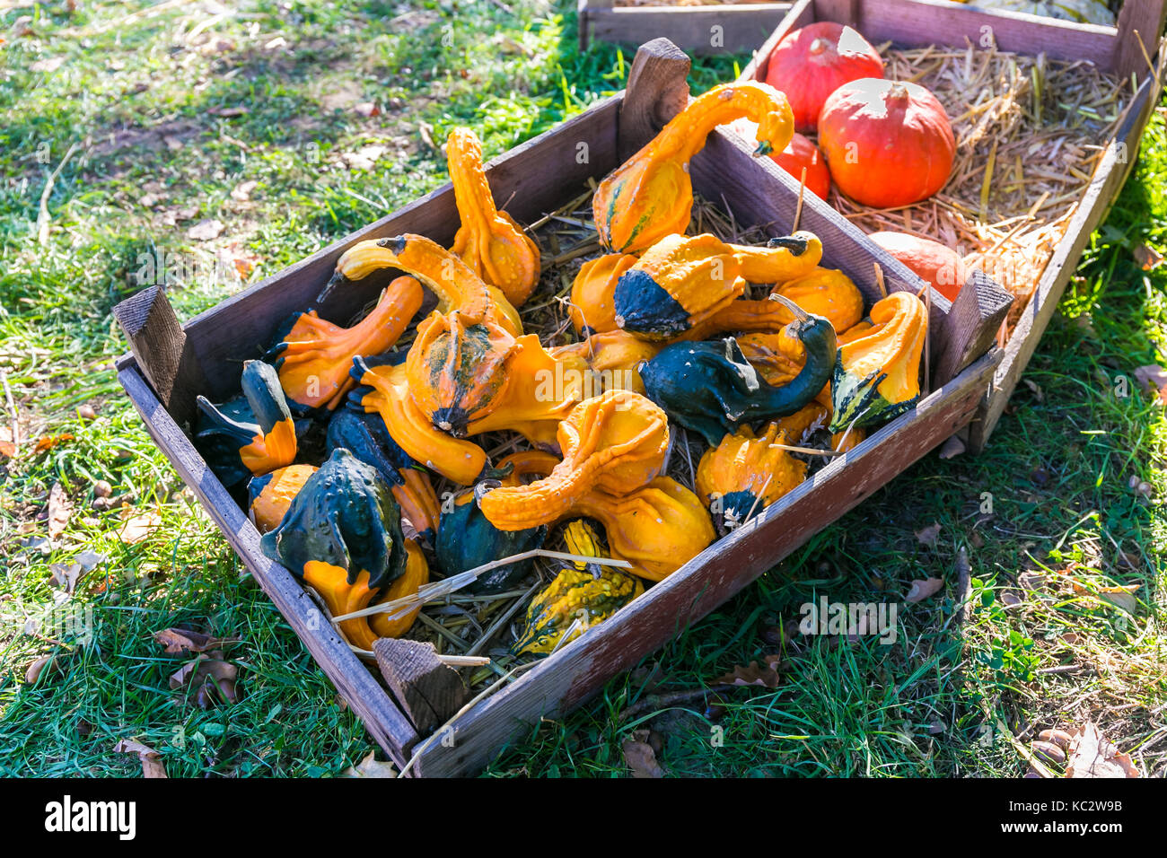 MERODE, GERMANY - SEPTEMBER 23, 2017 - Pumpkins for sale on a farm market. - Stock Image