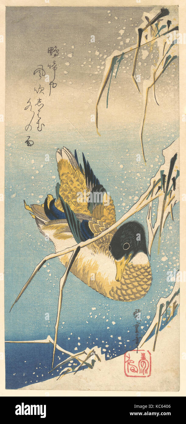 歌川広重画 雪中芦に鴨, Mallard Duck and Snow-covered Reeds, Utagawa Hiroshige, ca. 1832 Stock Photo