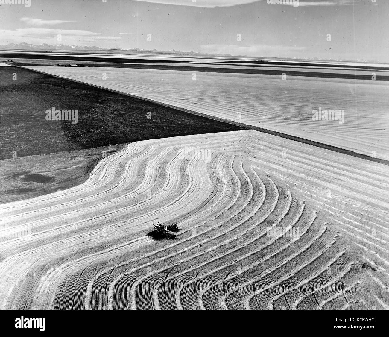 Photograph depicting wheat fields in Alberta with the Rocky Mountains in the background. Dated 20th Century - Stock Image