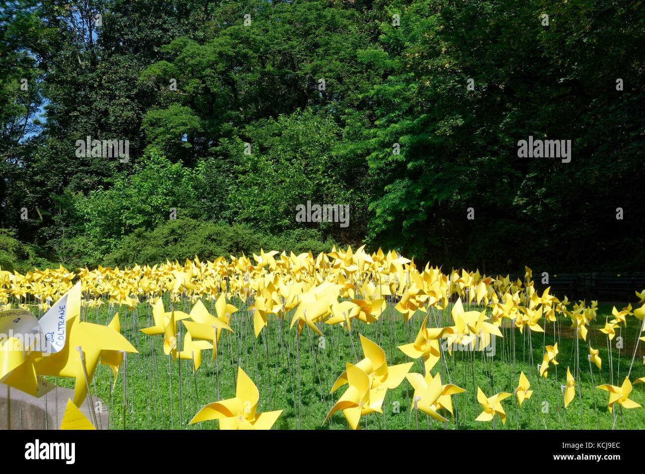 Thousands of yellow pinwheels displayed as an art installation in Prospect Park, Brooklyn to celebrate the 150th - Stock Image