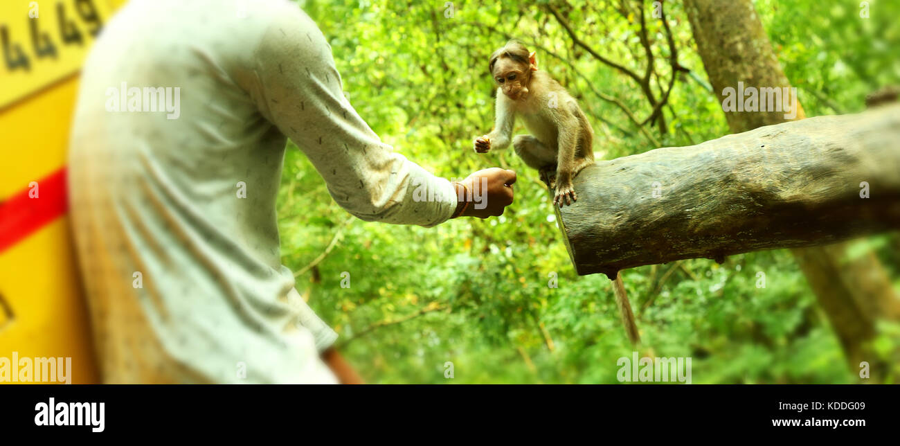 Young boy feeding a small monkey . - Stock Image