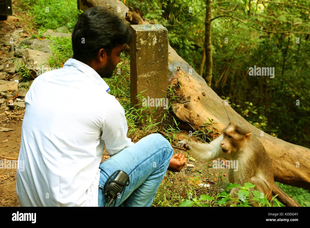 Young man feeding a monkey Stock Photo