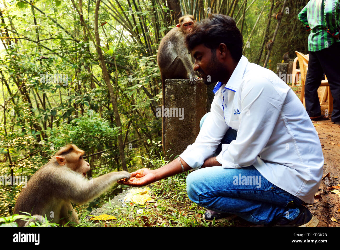 Young man feeding a monkey - Stock Image