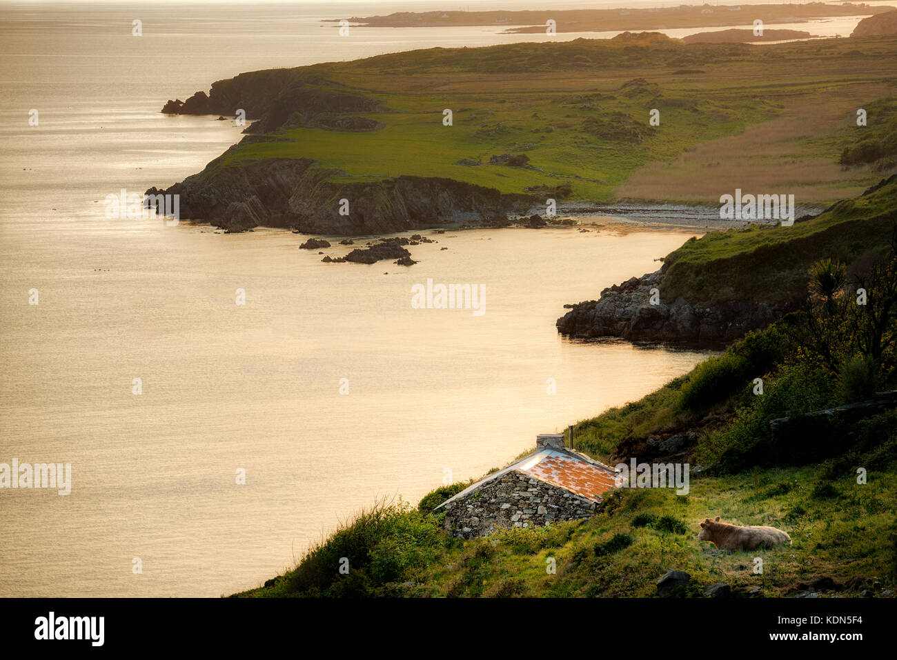 Cow, stone shack and coastline from Sky Road with Dolphine Beach. Near Clifden. Connemara,County Galway, Ireland - Stock Image