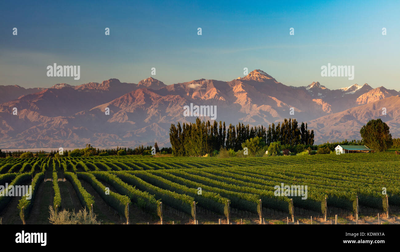 The Andes from the vineyards of the Uco Valley nr Tupungato, Mendoza Province, Argentina Stock Photo