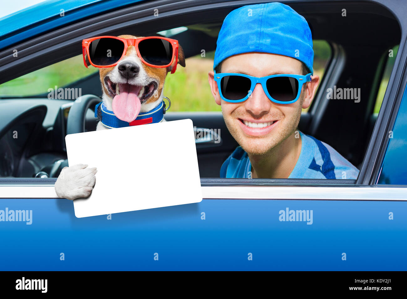 dog in a car looking through window with Driving instructor showing a blank and empty  drivers license - Stock Image