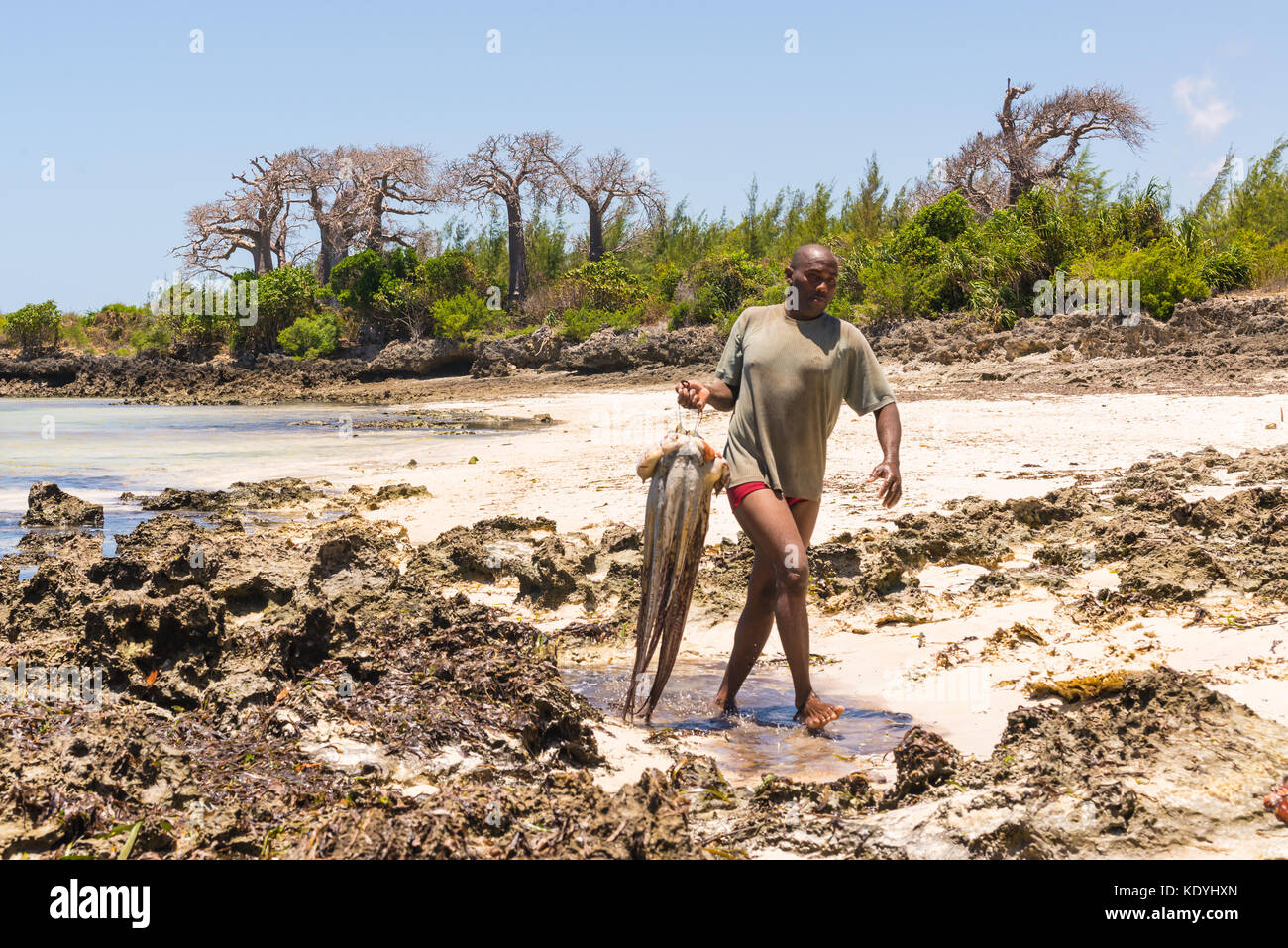 African spear fisherman holding freshly caught huge octopus walking in a pristine tropical beach with baobab in Stock Photo