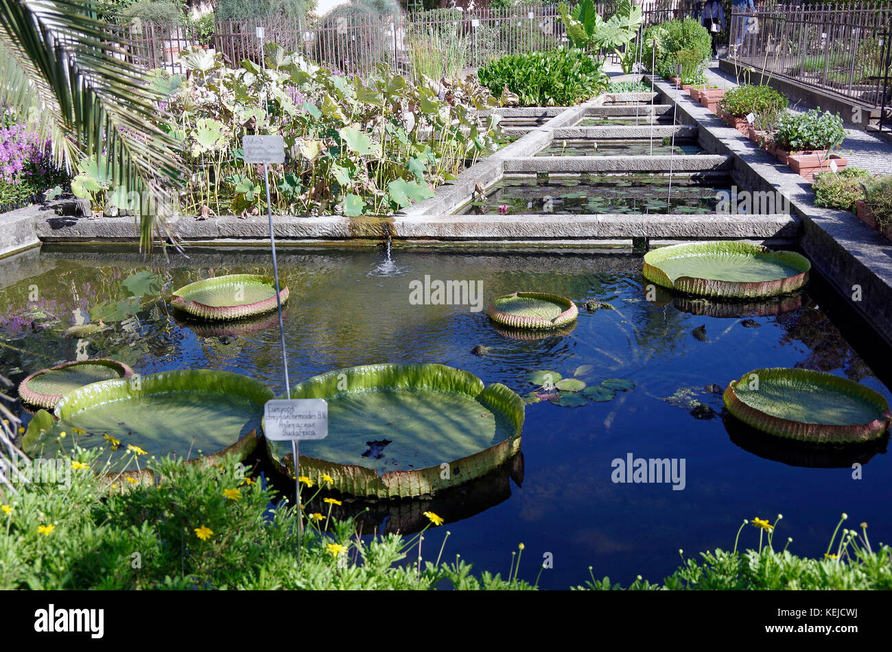 Orto botanico di padova padua botanical garden the world s