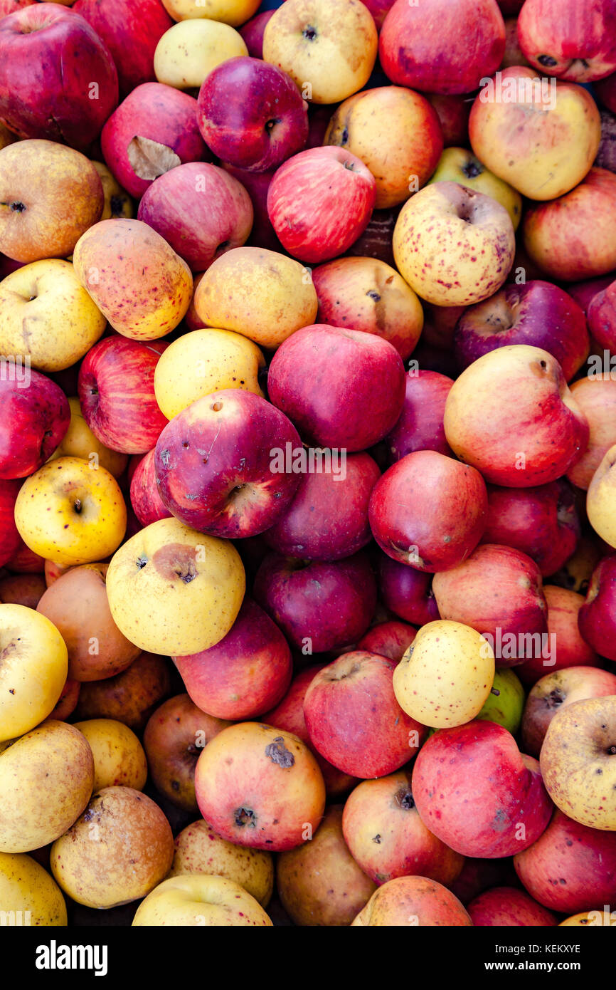 Red and yellow apples - Stock Image
