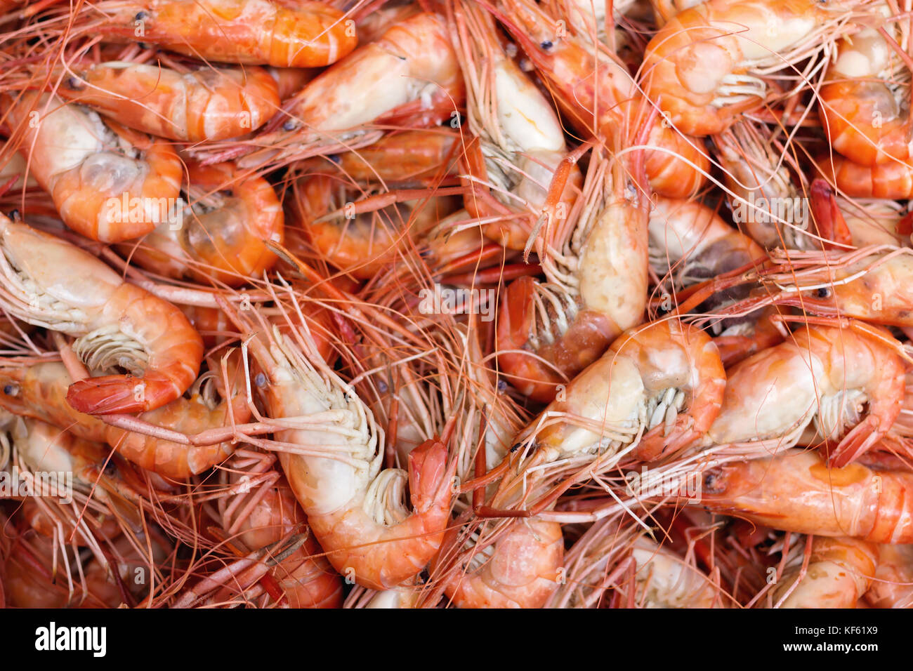 group of boiled giant freshwater prawn ready to eat at the fish market. selective focus. - Stock Image