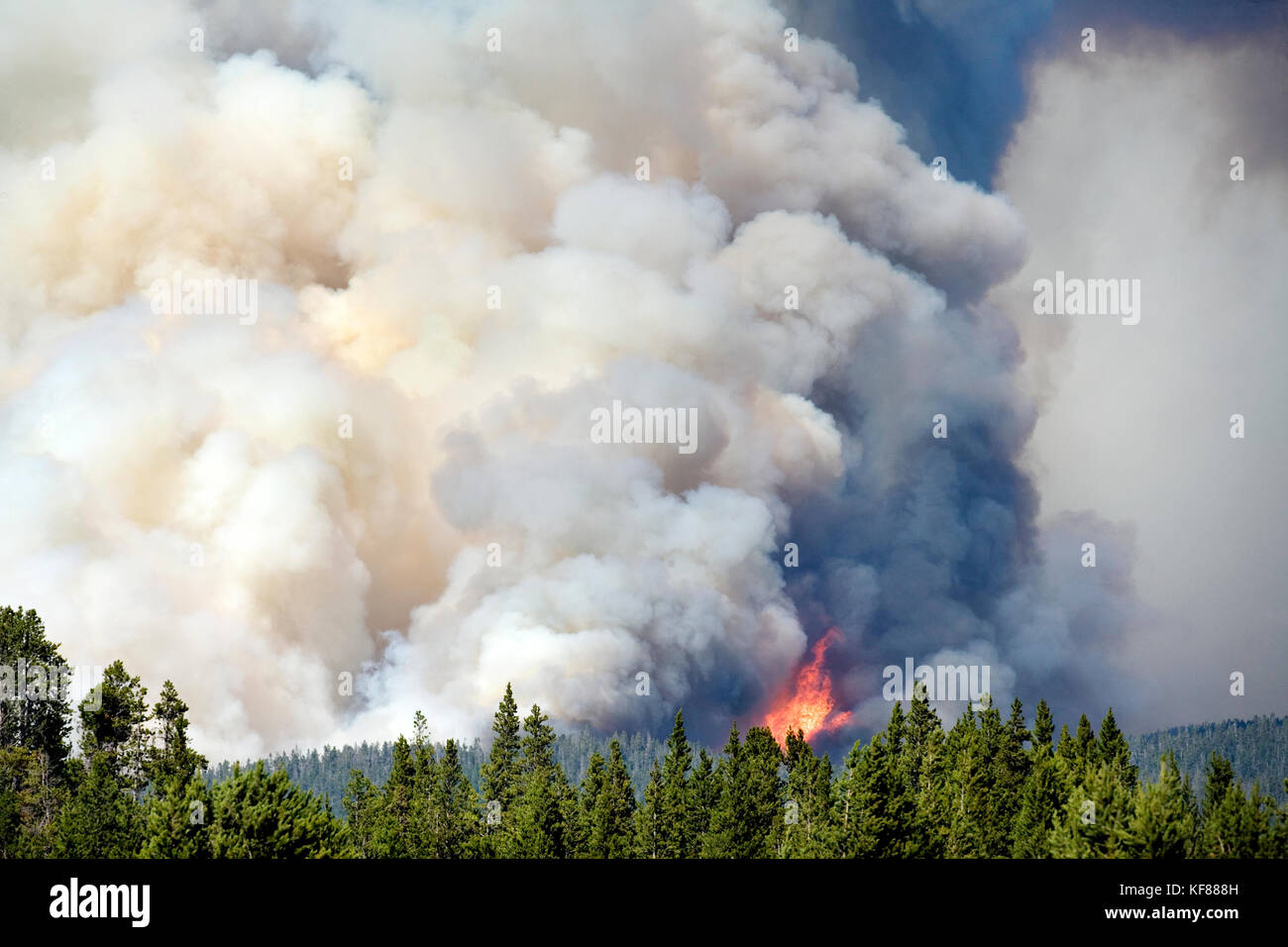 USA, Wyoming, forest fire, Fishing Bridge, Yellowstone National Park - Stock Image