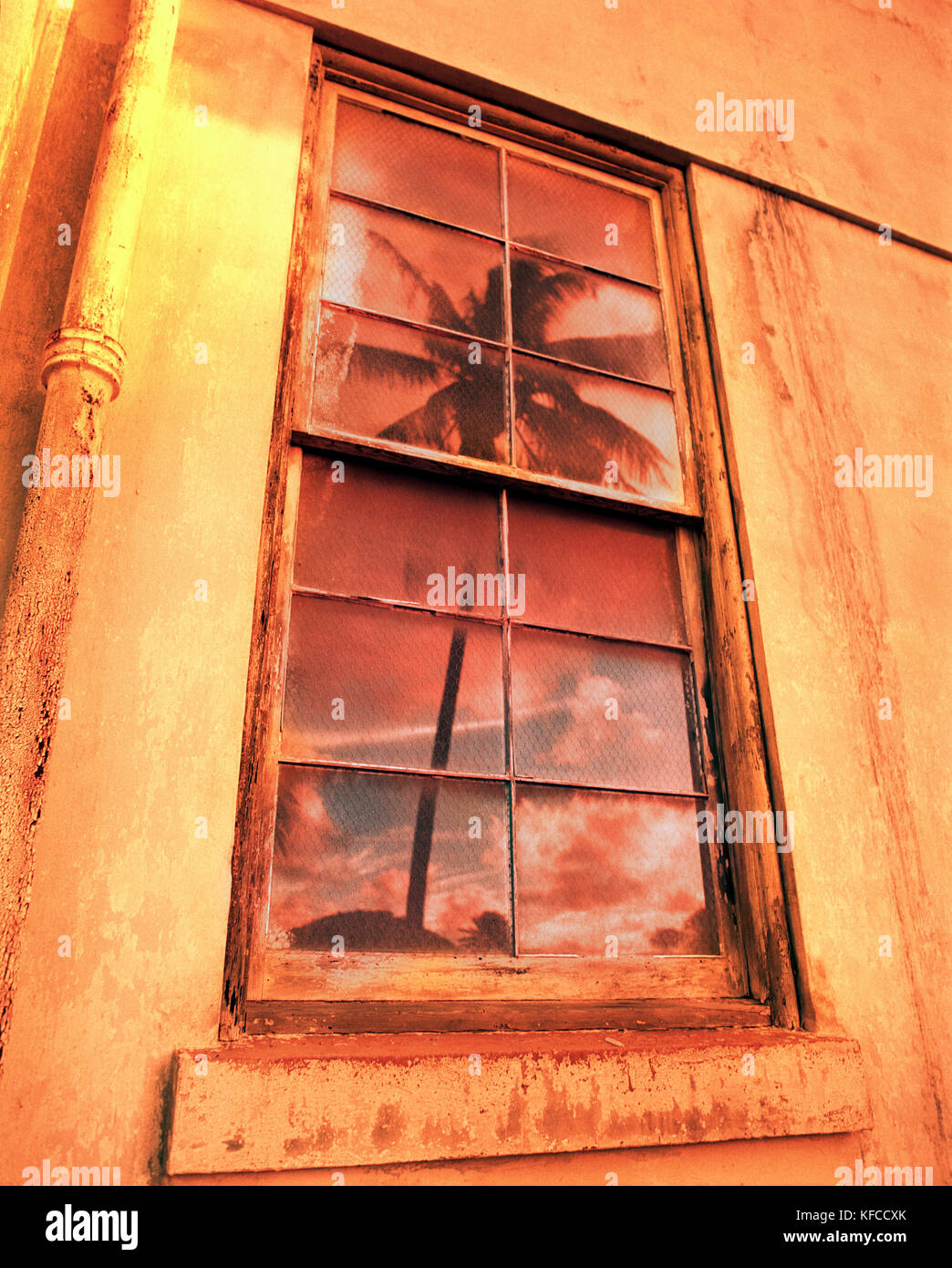 USA, Hawaii, Oahu, the North Shore, a palm tree and sunset reflect in the window of a building that was an old convent - Stock Image
