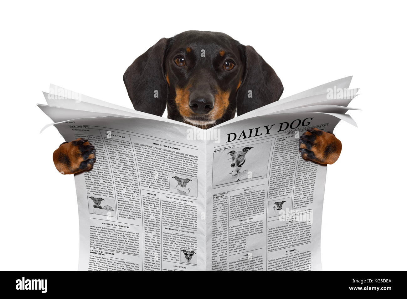 Awesome Soft Wirehaired Dachshund Model - Wiring Diagram Ideas ...
