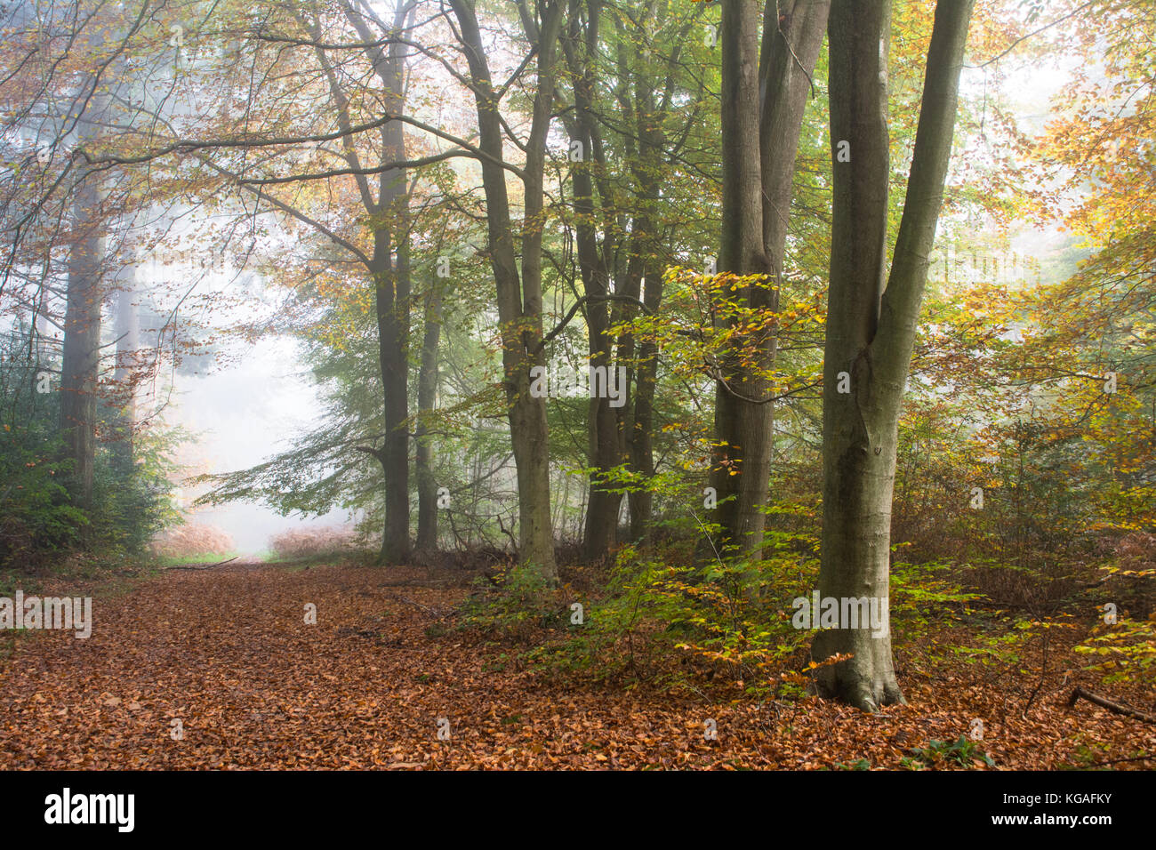 woodland-landscape-on-a-foggy-autumn-morning-at-ranmore-common-in-KGAFKY.jpg