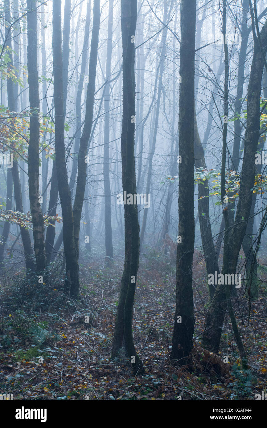 woodland-landscape-on-a-foggy-autumn-morning-in-the-north-downs-surrey-KGAFM4.jpg