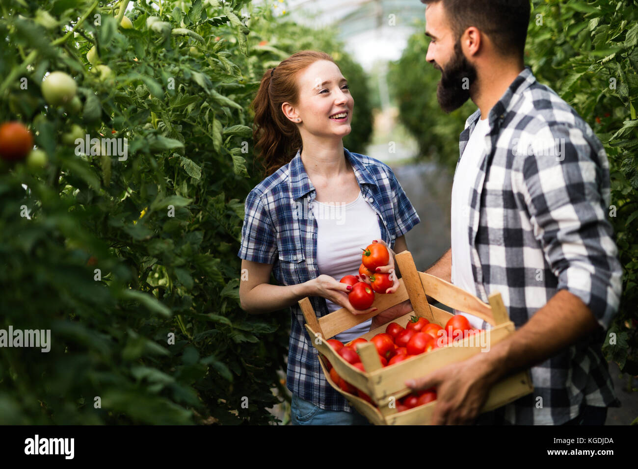 Young couple of farmers working in greenhouse - Stock Image
