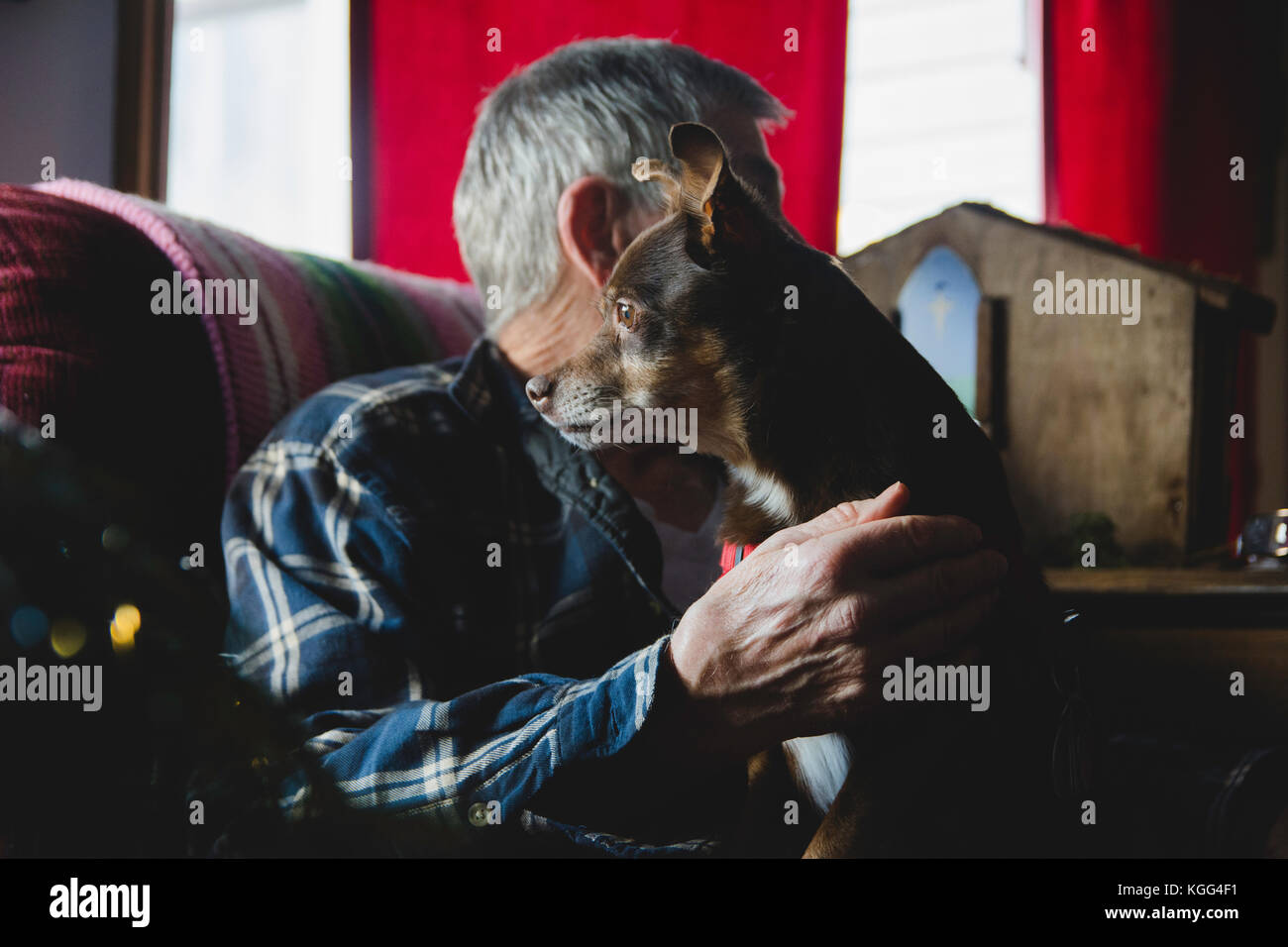 A small dog sits on the lap of an elderly man. - Stock Image