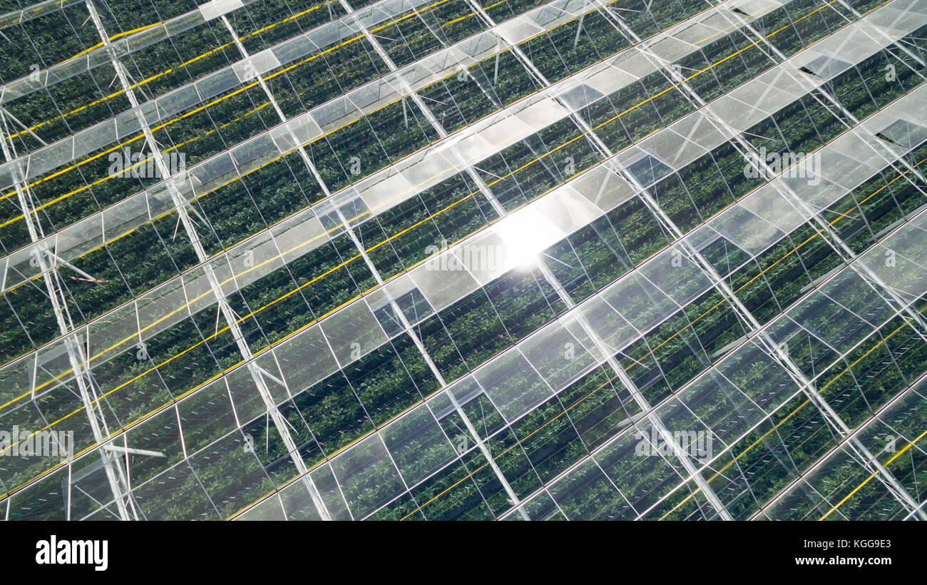 Aerial of greenhouses / glasshouses in the Westland area in The Netherlands - Stock Image
