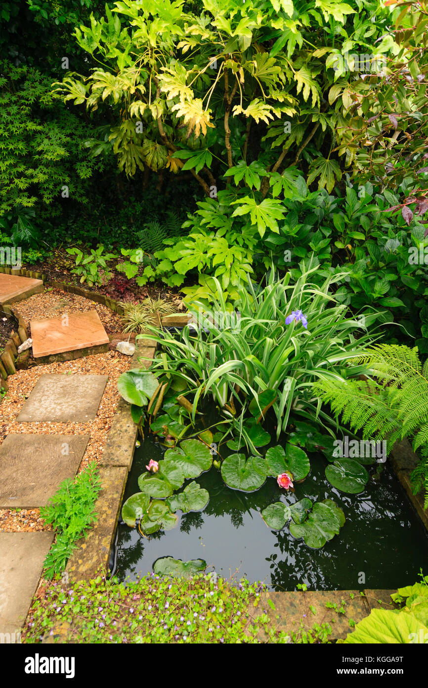 Small garden pond in an exotic garden in Plymouth, UK, surrounded by large leaved foliage plants Stock Photo
