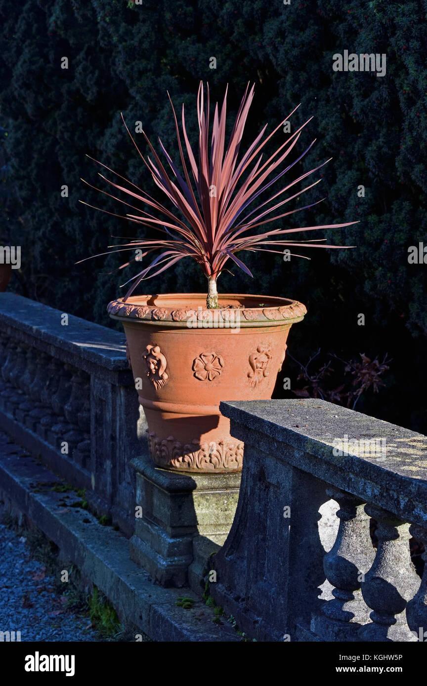 cultivar-cordyline-australis-red-star-in-terracotta-pot-rydal-hall-KGHW5P.jpg