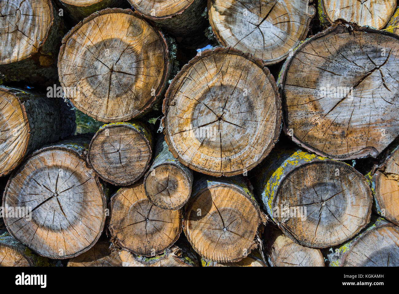 Stacked logs for fuel in woodland - France. - Stock Image