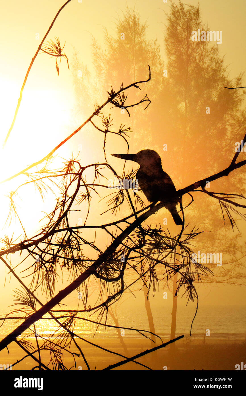 An abstract beach background with a silhouette of a kingfisher bird - Stock Image