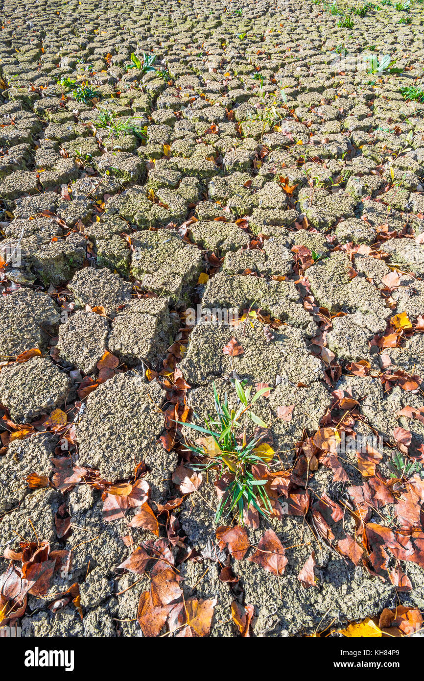 Cracked earth from drought - France. - Stock Image