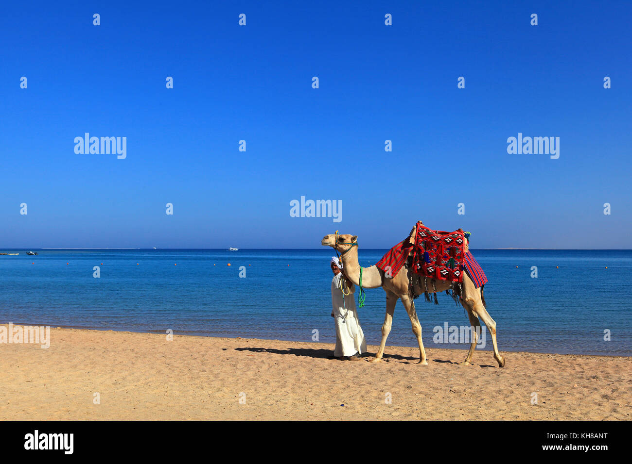 Egypte. Hurghada. Soma Bay. Red Sea.CamelStock Photo