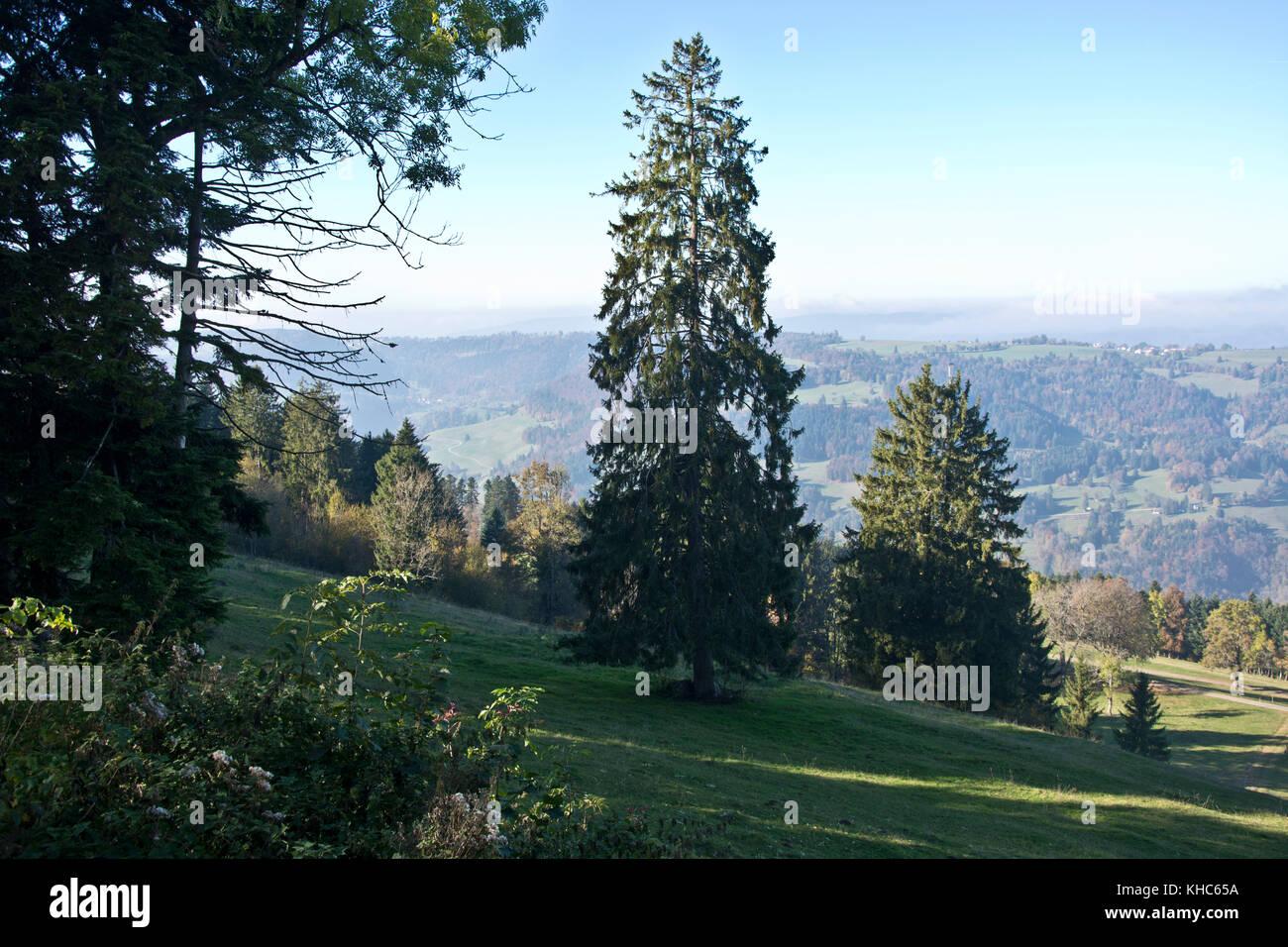 view over clos du doubs *** Local Caption *** switzerland, jura, franches montagnes, view, clos du doubs, valley, - Stock Image