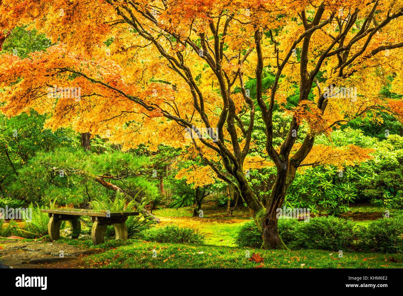 Japanese Maple Tree Stock Photos & Japanese Maple Tree Stock Images ...