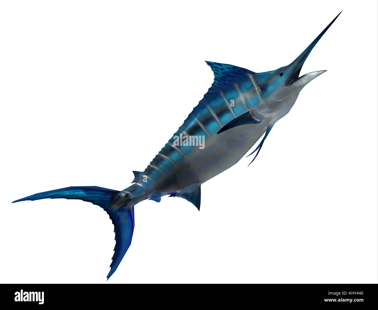 Predator Marlin Fish - The Blue Marlin is a favorite fish of sport fishermen and one of the predators of the Atlantic - Stock Image